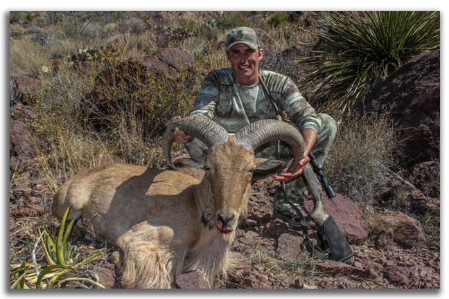 Aoudad-toughest-hunts-north-america