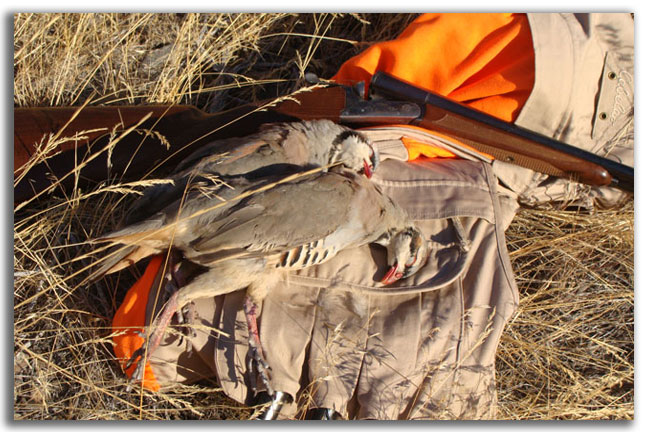 north-america-tough-hunt-for-chukars