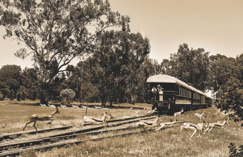 train-safari-in-africa