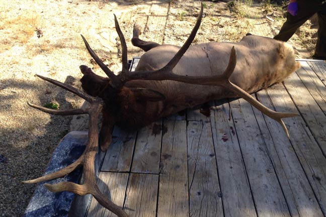 boone-and-crockett-new-poaching-fines