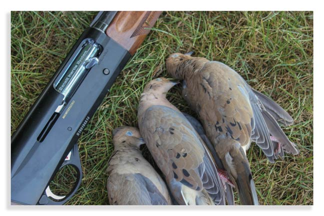 dove-hunt-for-new-hunters