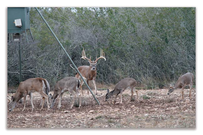 how-not-to-manage-deer