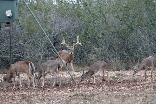 Where Do Whitetails Go? Here's What Science Says