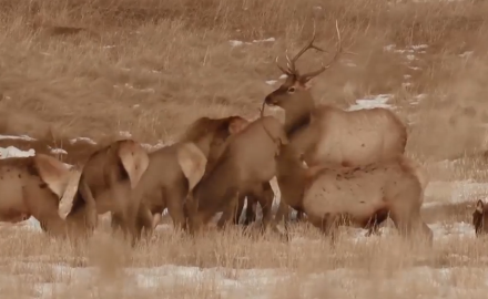 Kevin Steele waits for the right chance to take an elk in the frigid temps of the Colorado