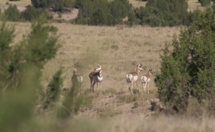 Associate editor Kali Parmley joins up with Jason Morton of CZ-USA to chase speed goats in Colorado.