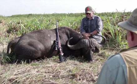 Craig Boddington battles a hot day in the swamp as he tags along on a buffalo hunt in Mozambique.