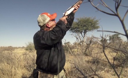 Kevin Steele and Dave Miller of CZ-USA are in the Kalahari shooting sand grouse with a newly
