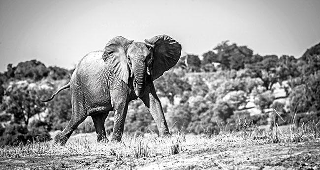 Namibia-Elephant