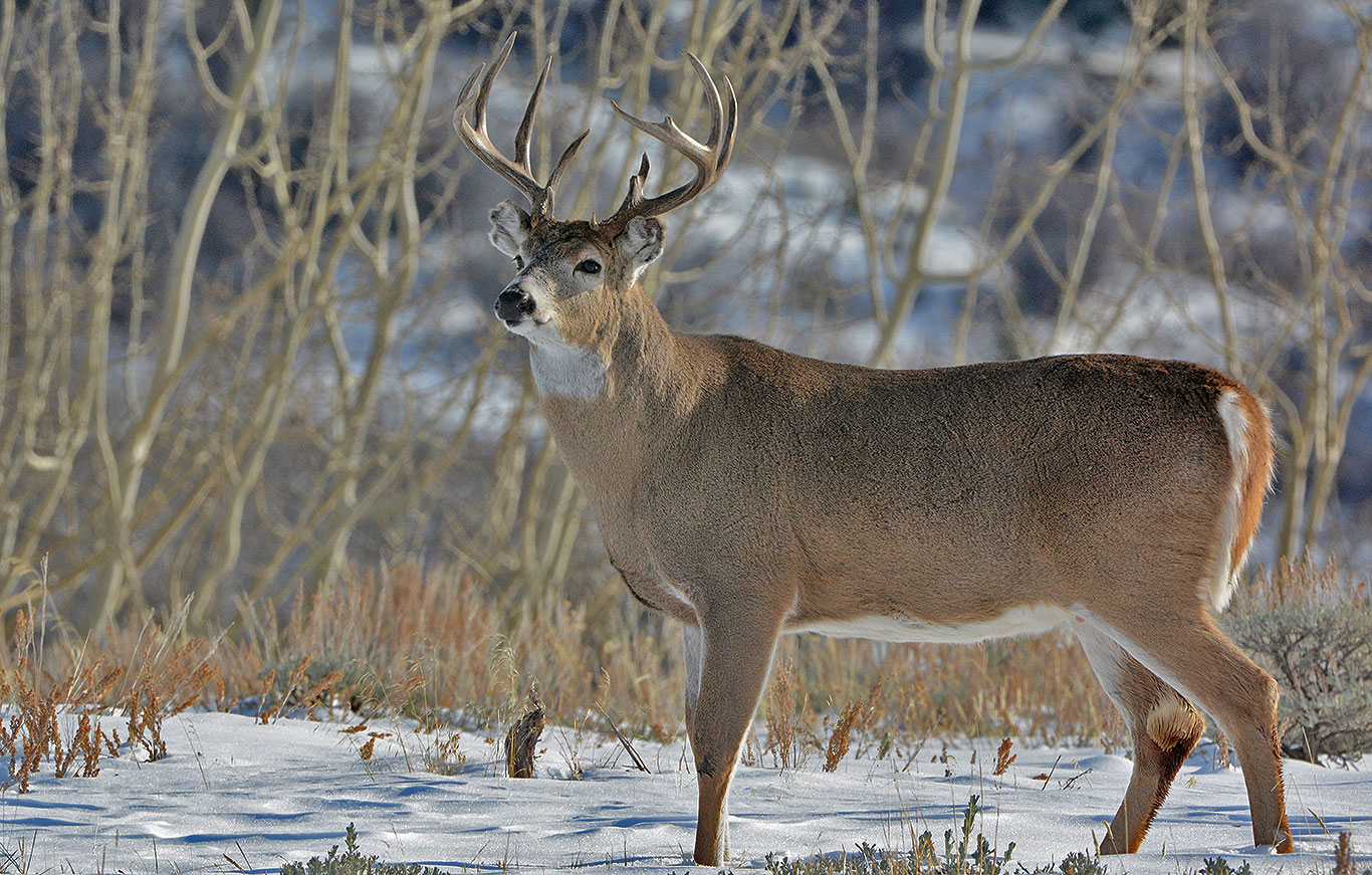 central-montan-whitetail-deer-hunting