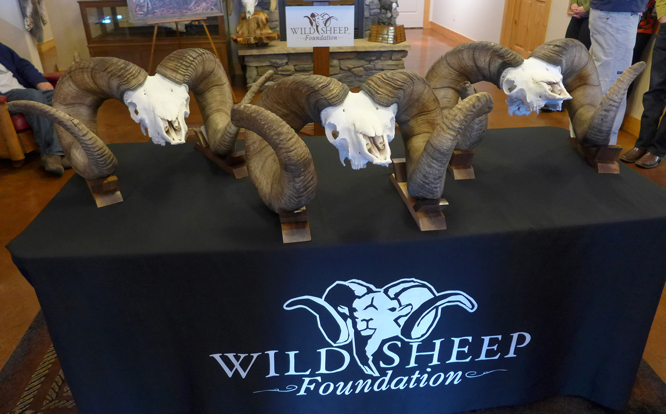 Bighorn Sheep World Records