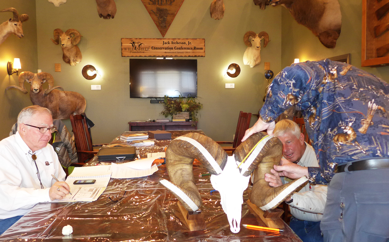 New Montana Bighorn Sheep World Record