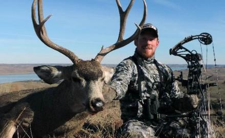 Mule-Deer-8