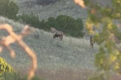 2018 Petersen's Hunting Episode 12: High Plains Elk