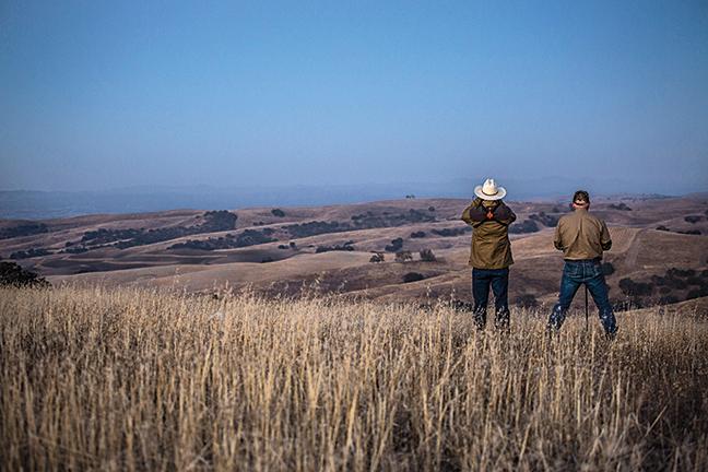 Hunting Hogs in California