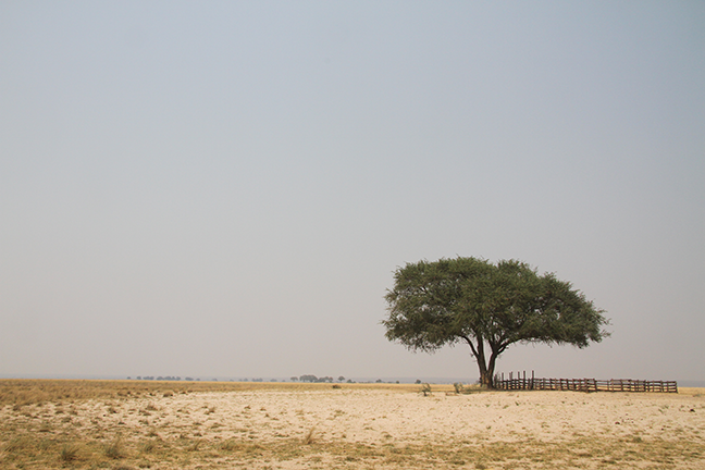 Namibia plains