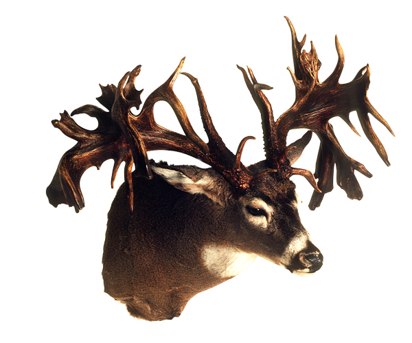 //www.petersenshunting.com/files/biggest-non-typical-whitetails-of-all-time/02_portage_county_ohio.jpg
