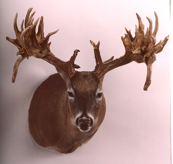 //www.petersenshunting.com/files/biggest-non-typical-whitetails-of-all-time/06_fulton.jpg