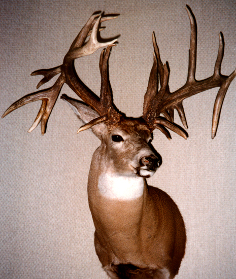 //www.petersenshunting.com/files/biggest-non-typical-whitetails-of-all-time/14_joseph_waters.jpg