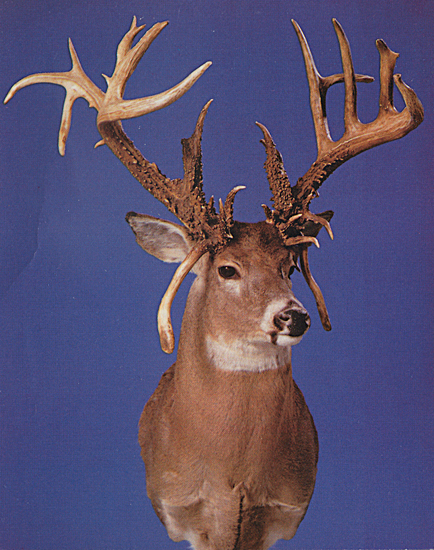 //www.petersenshunting.com/files/biggest-non-typical-whitetails-of-all-time/18_del_austin.jpg