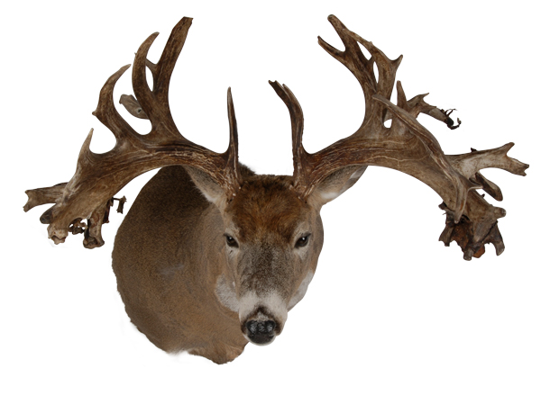 //www.petersenshunting.com/files/biggest-non-typical-whitetails-of-all-time/20_helgieeymundson.jpg