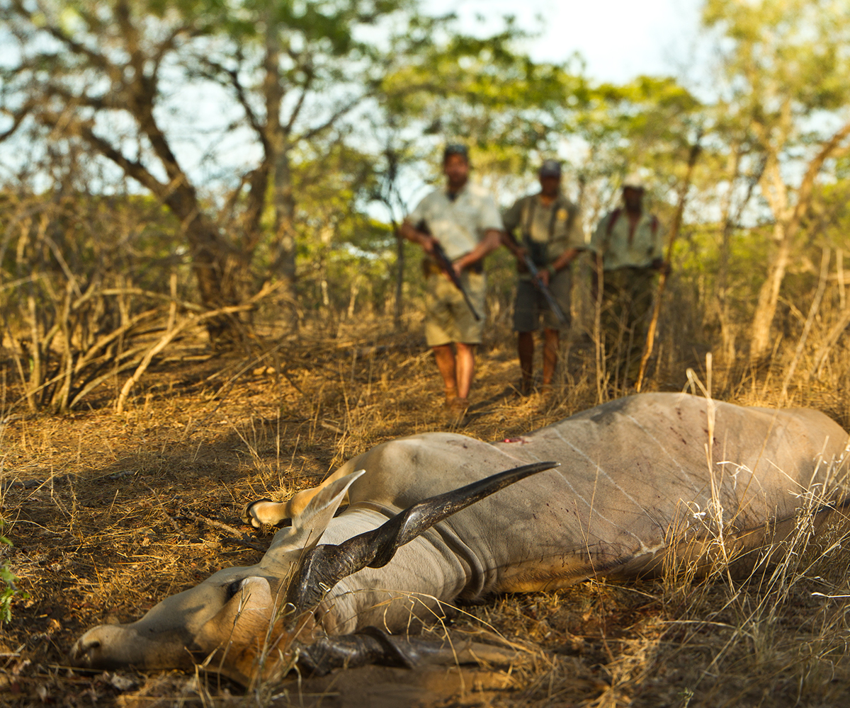 Most Amazing: HUNTING's 50 Most Amazing Photos