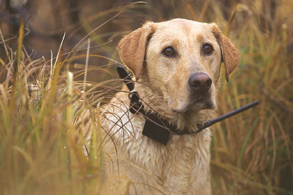 Keep Dogs Hunt-Ready