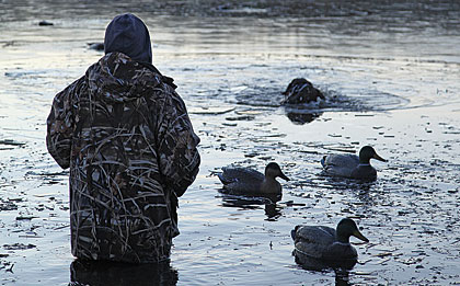 Greenheads flock to a frozen watering hole.