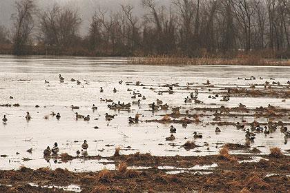 wf_wetlands_0909a