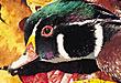wfriver_duckspsh