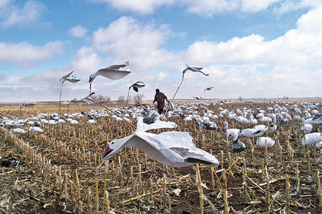 Snow Goose Spread tips