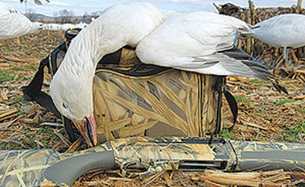 Without question, spring snow goose hunting requires a large decoy spread. But the act of merely