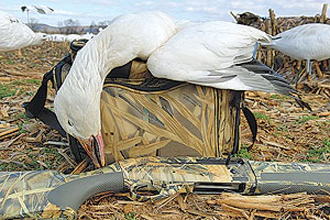 Snow Goose Spread Strategy