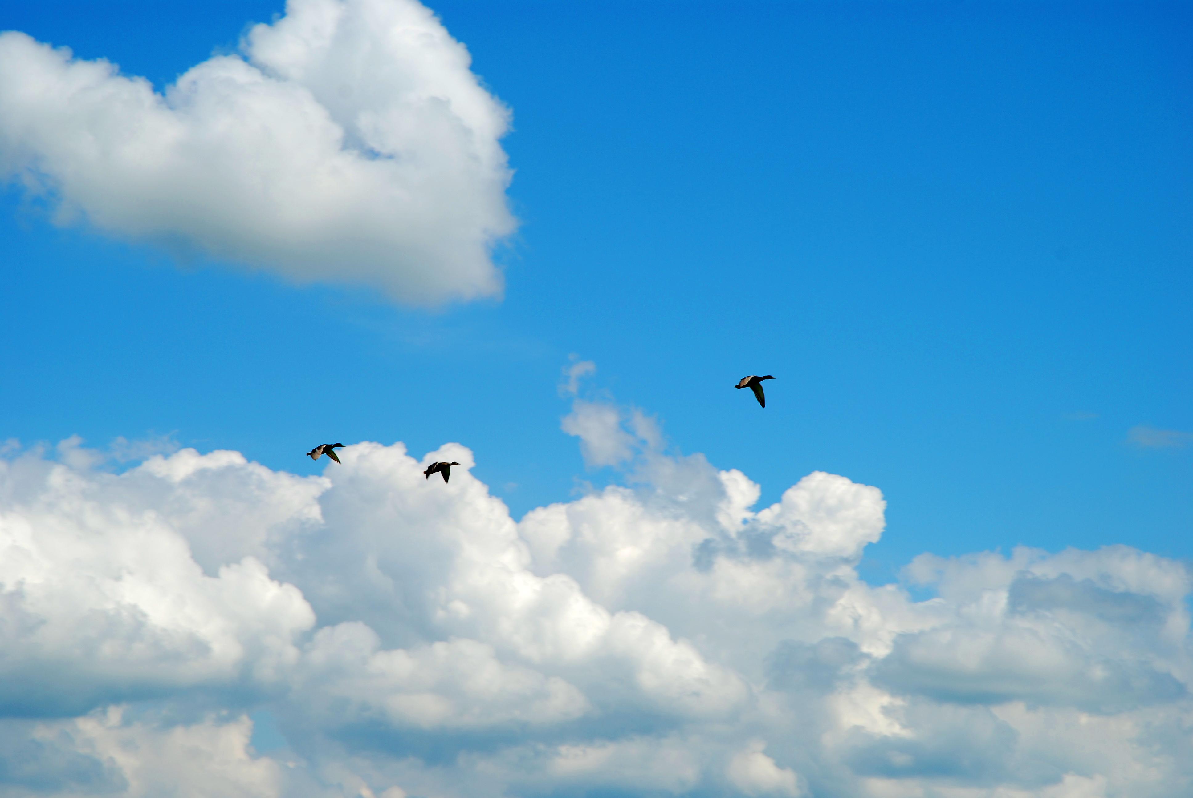 ducksfly