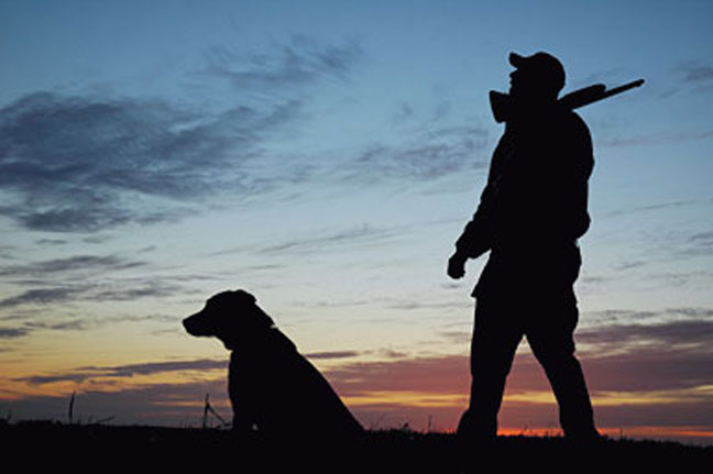 How to travel correctly with a hunting dog