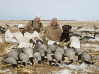 Minnesota geese