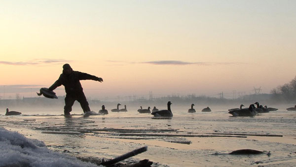 Why Geese Make the Best Duck Decoys - Wildfowl