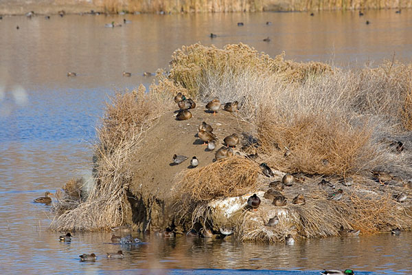 8 Great Strategies For Duck Hunting Wildfowl