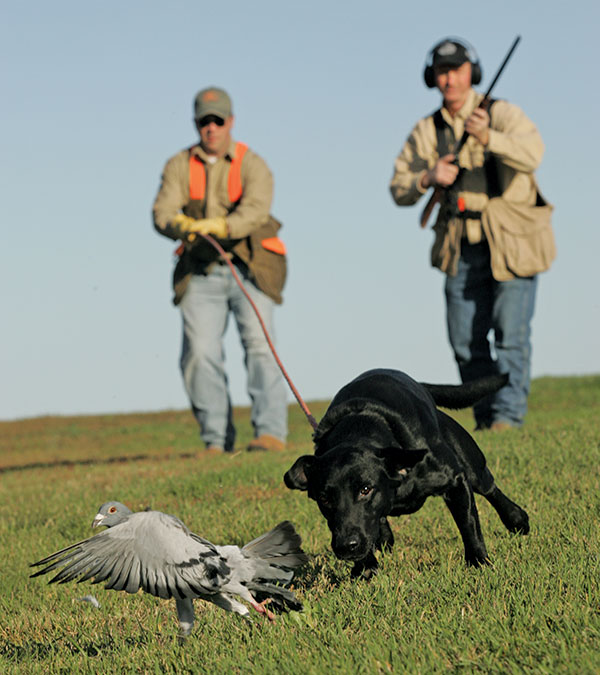 There are many aspects of bird-dog training that will offer you a second chance should the first