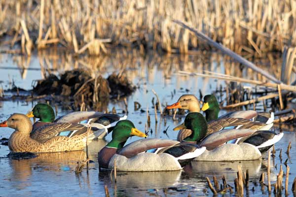 07_dakotadecoy_mallards