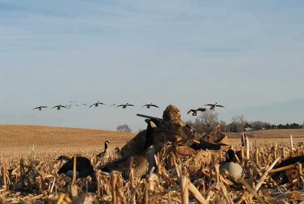 Best Tips For Hunting Canada Geese This Season Wildfowl