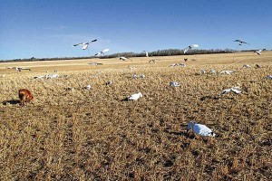 How to use motion in your watefowl decoys
