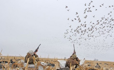Maybe you've always wanted to try your hand at a dry field hunt in the Dakotas. Maybe you've