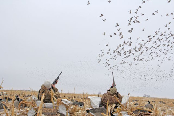 10 Great Duck Hunting Destinations