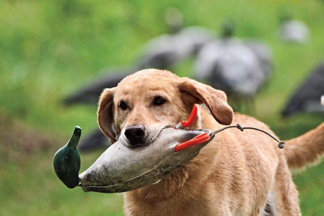 Dog dummy dummy pet training