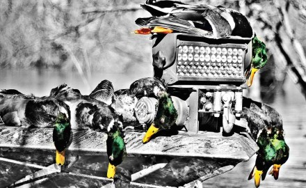 Your wife loves to accessorize, and so do you...when it comes to chasing birds. From lanyards to