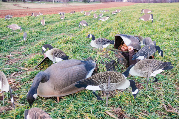 Silhouette Strategies: Why 2-D Decoys Dominate