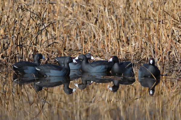 How to Make Small Decoy Spreads Work for You - Wildfowl