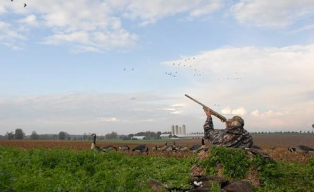 If you want to kill more ducks and geese on your field layout hunts then you need to make sure