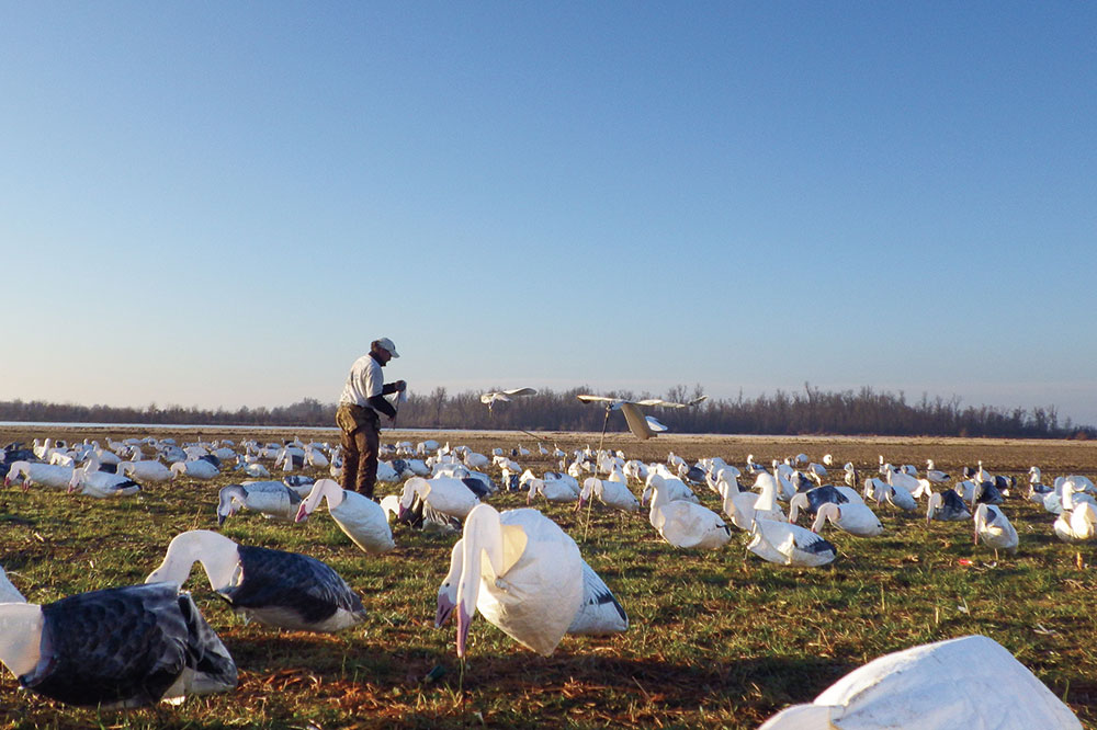 snow_goose_country_decoys_01