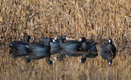 Using small decoy spreads for duck hunting